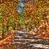 © William E. Dixon PhotoID# 11122190: Alabama Mountain Road