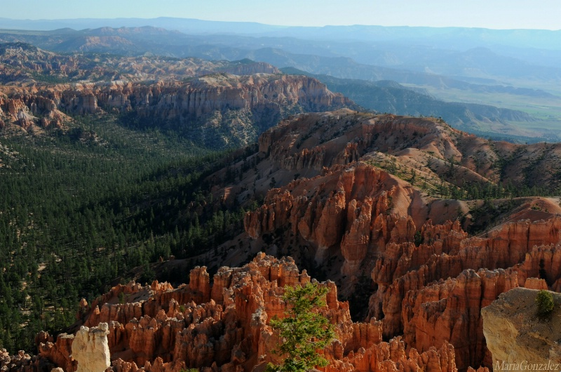Shapes & Textures Of Bryce Canyon