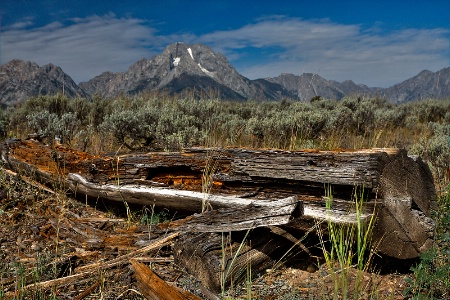 Teton Log (My Old Friend)