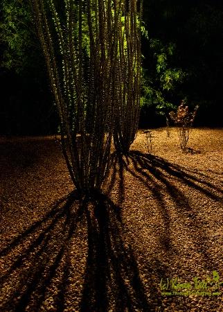 Desert Botanical Gardens, Scottsdale, AZ