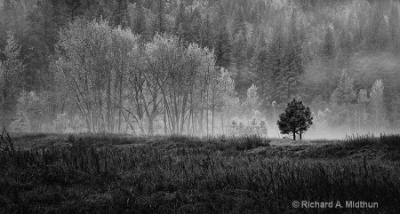 Tree Line in the Morning Mist
