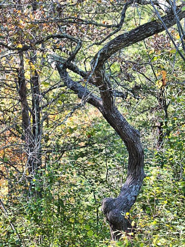 Booty Tree