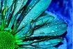 Wet Aqua