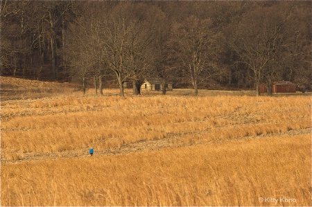 A Walk in the Field at Valley Forge