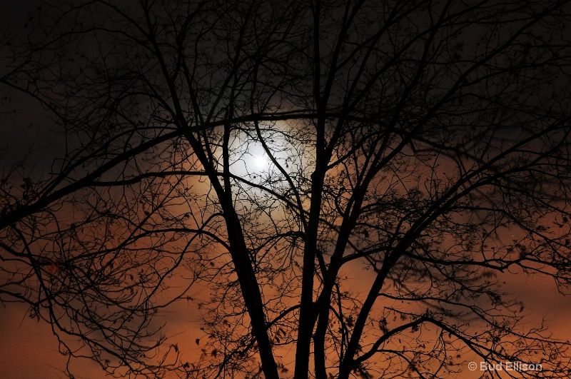 Thanksgiving Moon Through The Branches