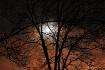 Thanksgiving Moon...