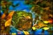 fractal stream