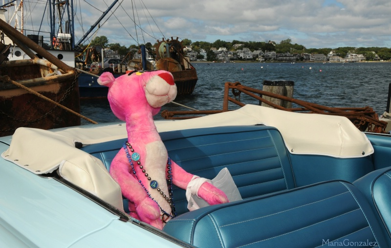 Pink Panther Rides In Style