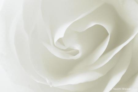 hidden in white
