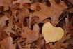 ~Fall Heart~