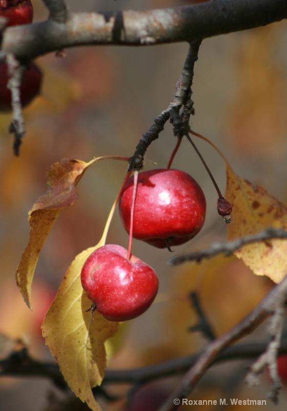 Autumn Harvest - ID: 11200259 © Roxanne M. Westman