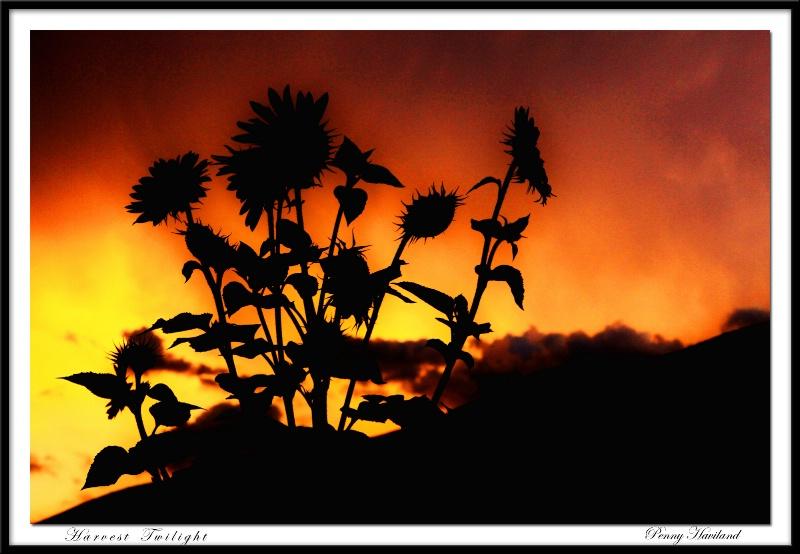 Harvest Twilight