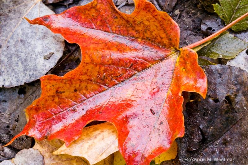 Fallen Beauty - ID: 11216062 © Roxanne M. Westman