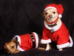 Happy Holidays Fr...