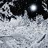 2A Distant Star - ID: 11222975 © Eric Highfield