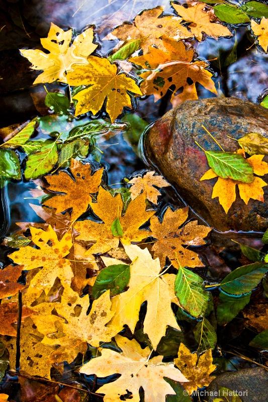 Autumn Afloat - ID: 11225301 © Michael Hattori