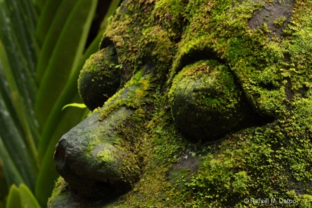 Botanical God