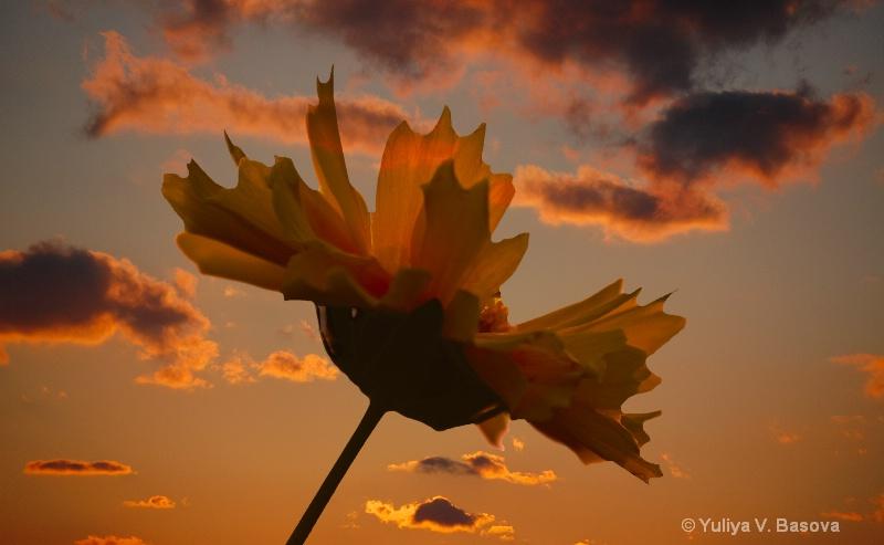 NC Flowers<p> - ID: 11245737 © Yulia Basova