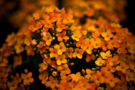 Melody in Orange 2