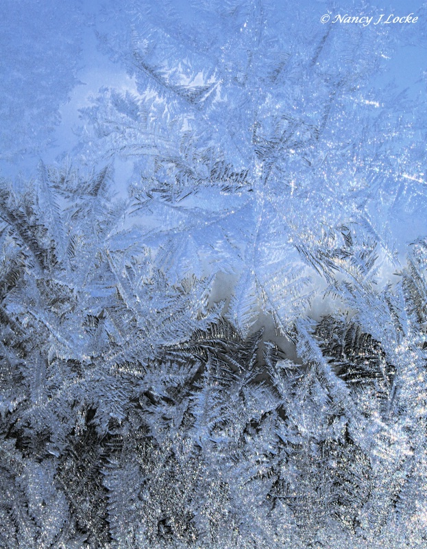 Ice Fronds