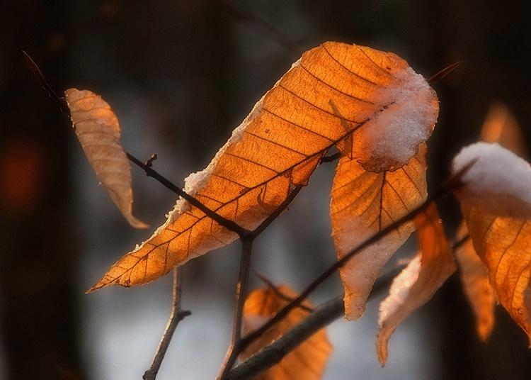 Winter leaf.
