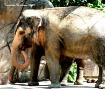Elephant.....