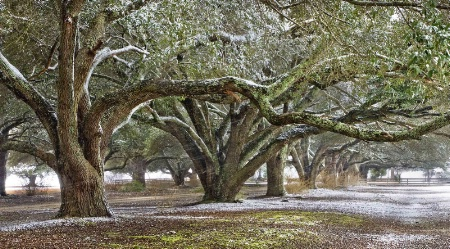 Lowcountry Winter