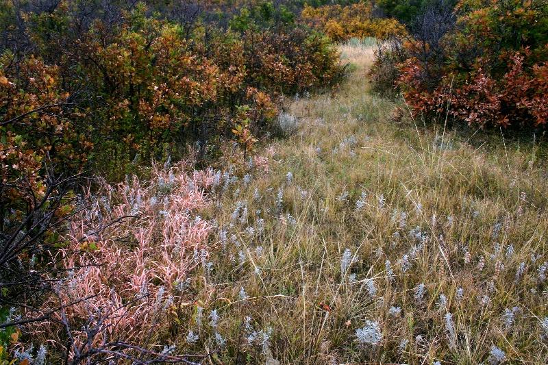A Colorado Fall Palette