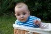 basket case origi...