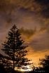 Norfolk Island pi...