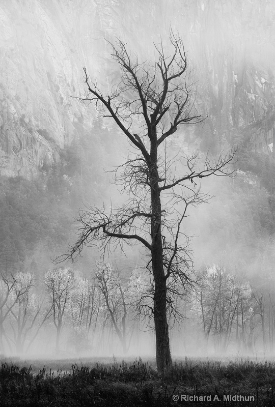 Bare Tree and Meadow in Mist