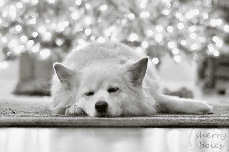 tired doggie