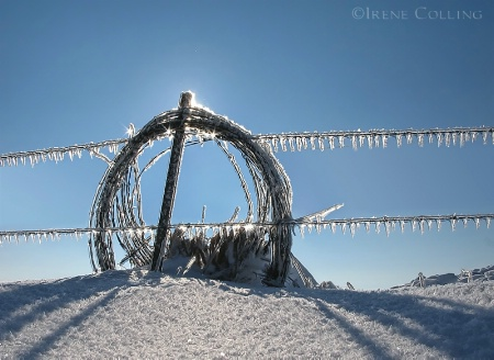 Wire & Ice