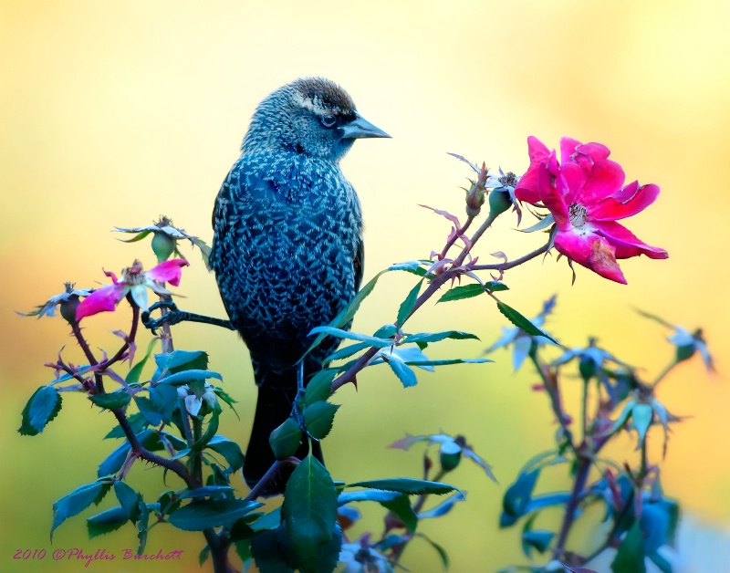 Fly Blackbird Fly