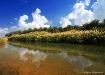 Nature reflection...