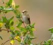 Finch # 2