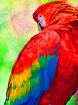 pretty bird##used...
