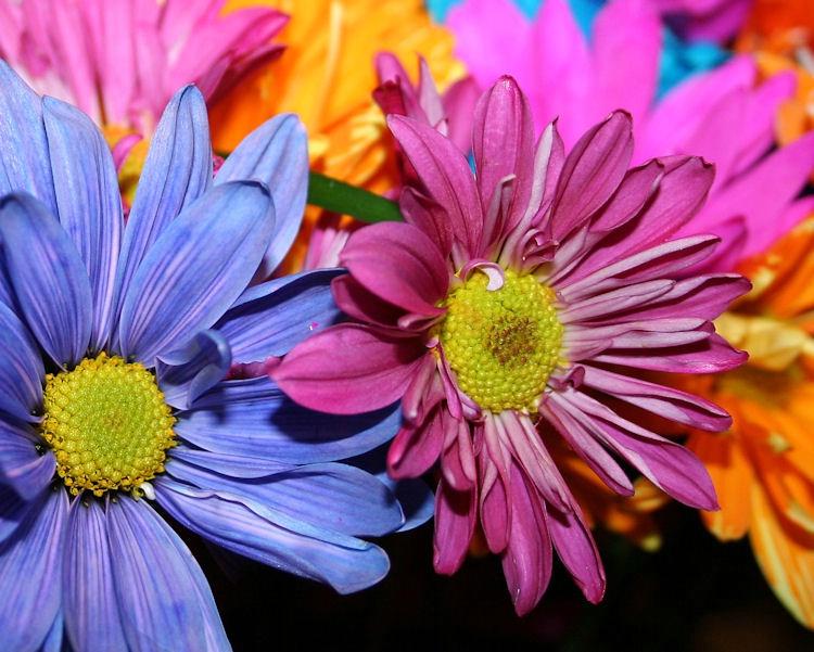 birthday flowers 003
