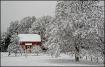 White Christmas i...