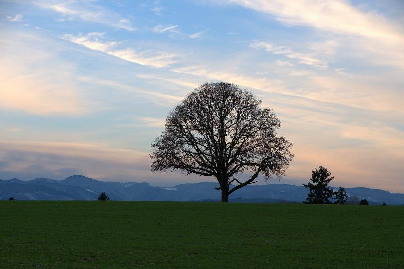 winter tree - ID: 11340992 © cari martin