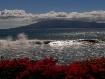 Maui 5D - Flowers...
