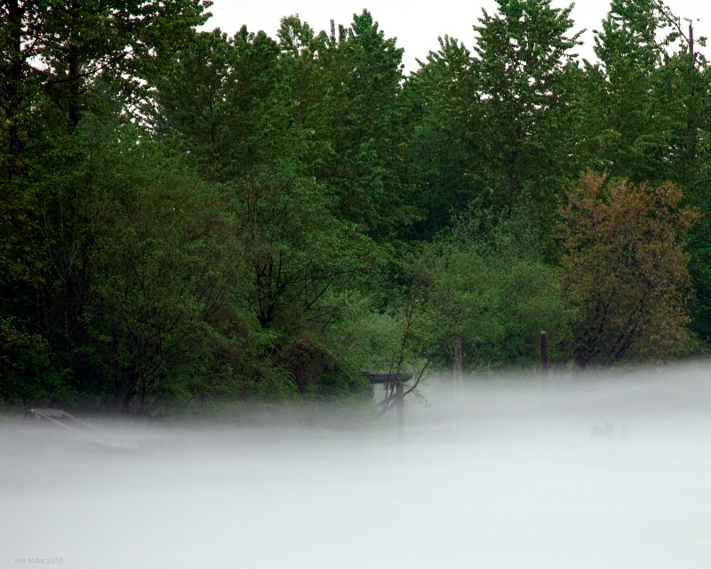 Lifting Fog On The Snohomish River