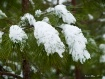 Snow in the Carol...