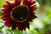 2 flower backligh...