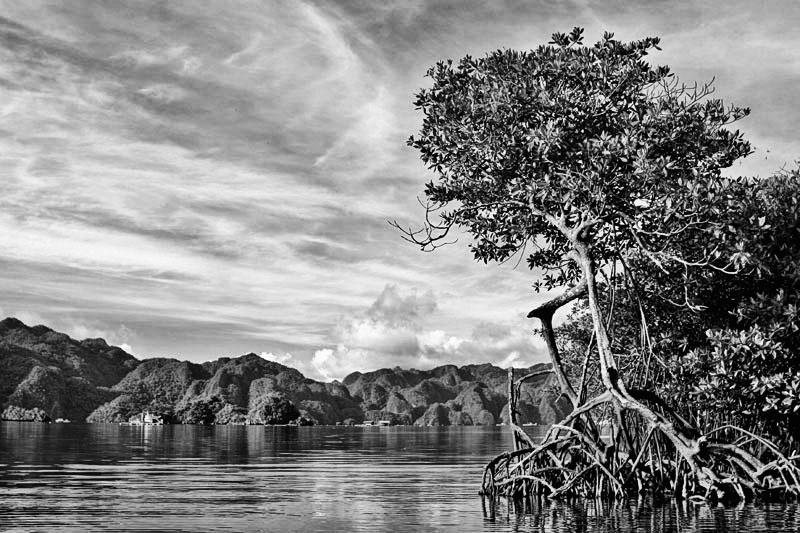Mangroves of Palawan