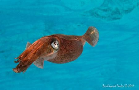 Squid Inspection
