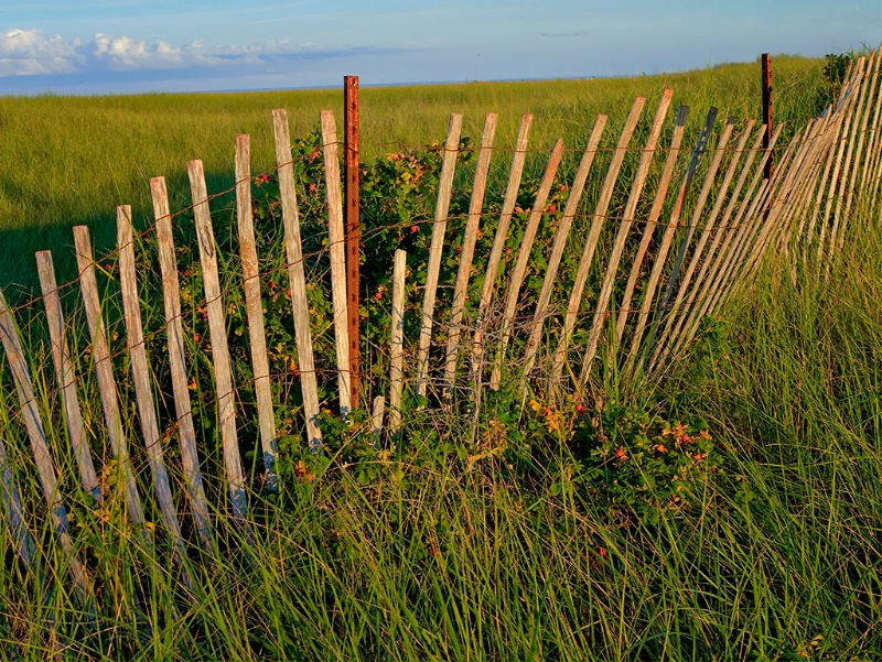 Stressed Beach Fence