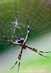 Bebe araña (new ...