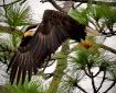 Behind The Feath...