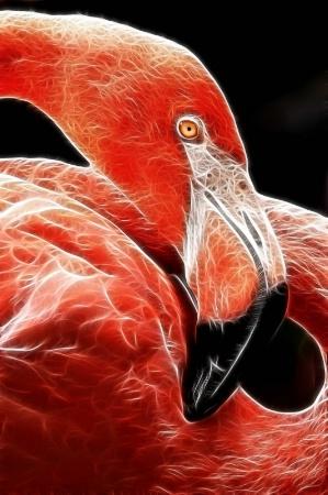 Electric Twisted NZ Flamingo